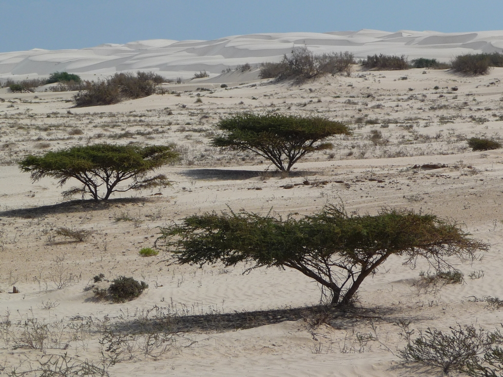 vegetation-desert blanc-khaluf-decouverte-oman
