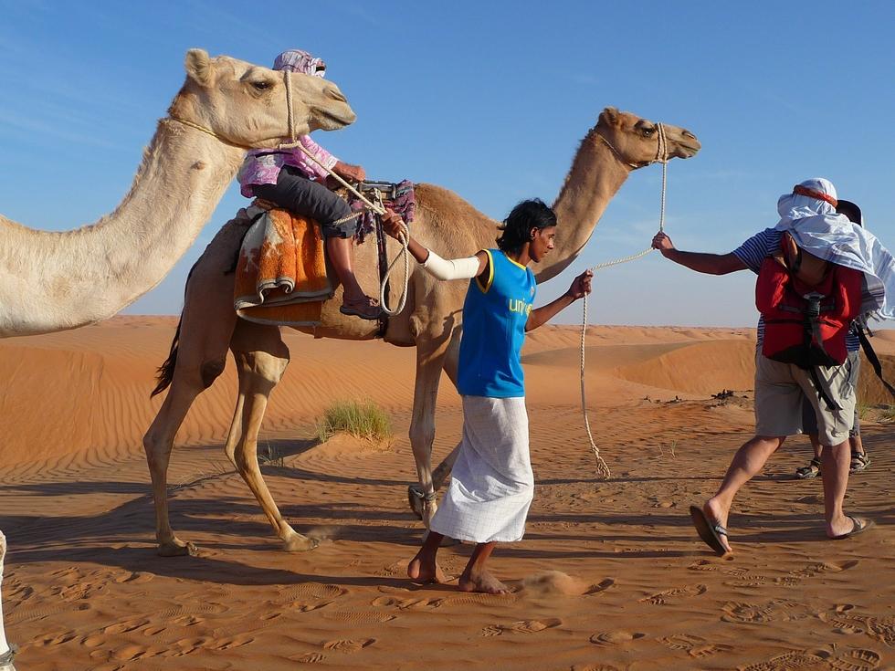 Oman. Randonnée avec chameaux. dans le désert de Wahiba.