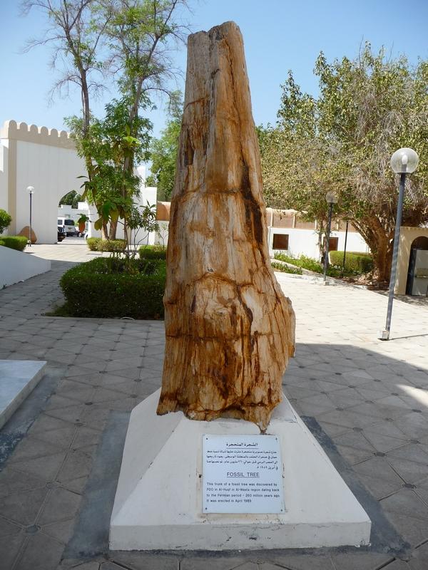tronc d'arbre fossile-musee d'histoire naturelle-mascate-