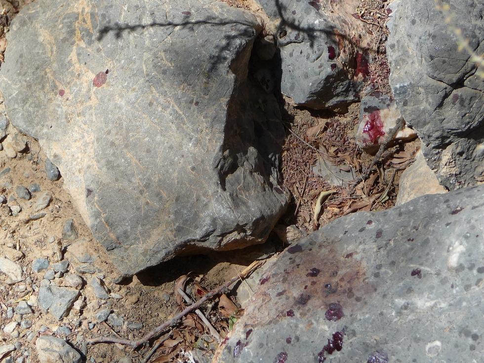 gouttes de sang au sol-decouverte-oman