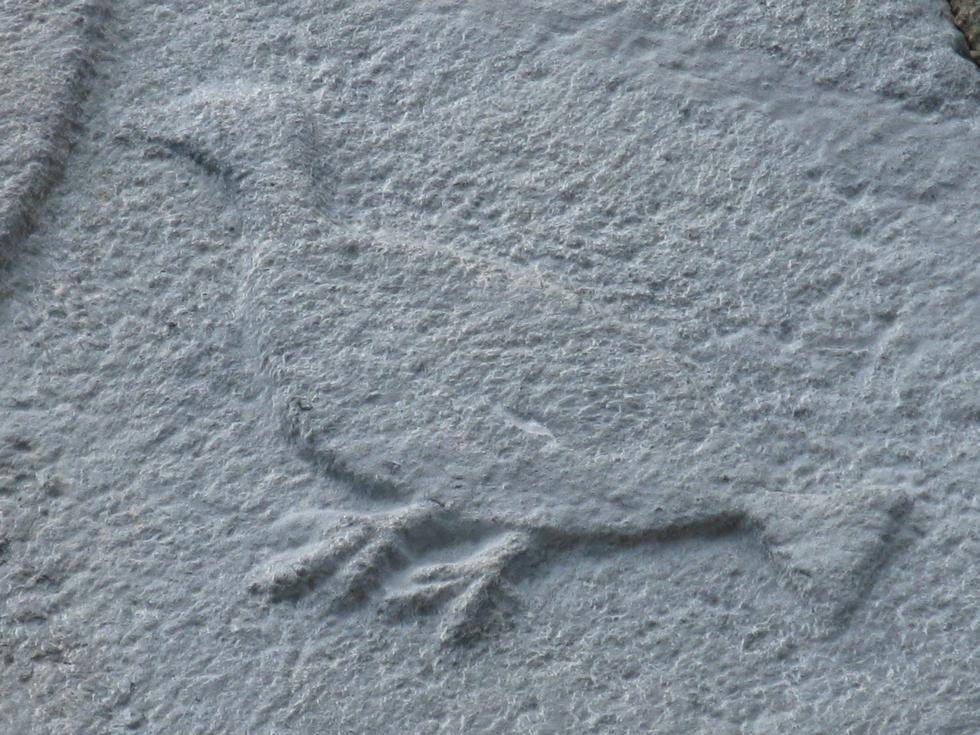detail-tympan-estensan-colombe-aure