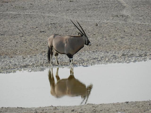 antilope-oryx-namibie