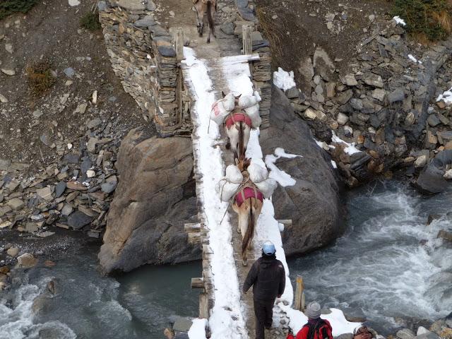 caravane-mulets-transportant-sacs-de-riz-tour-des-annapurnas-nepal
