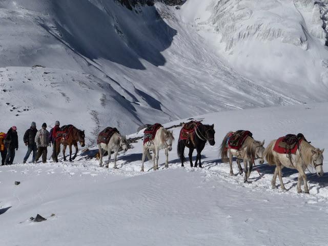 chevaux-montee-thorong-la-tour-des-annapurnas-nepal