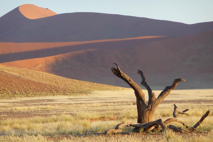 habitat-particulierement-difficile-namibie