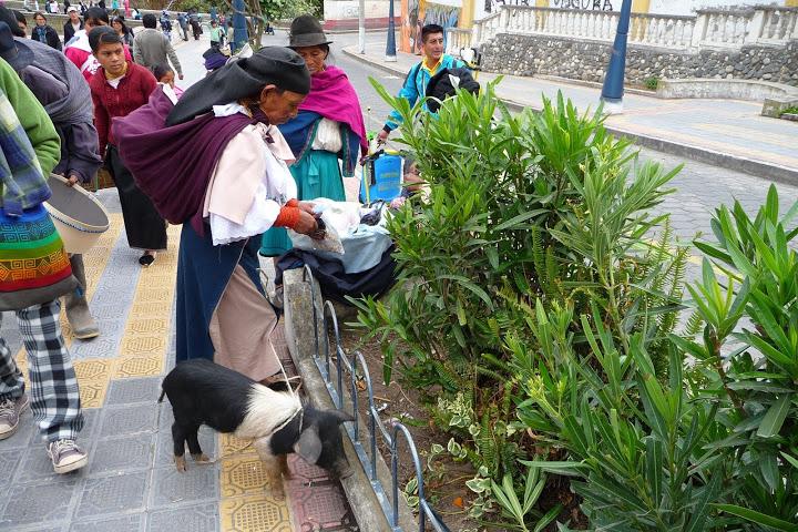 marchande-cochon-equateur