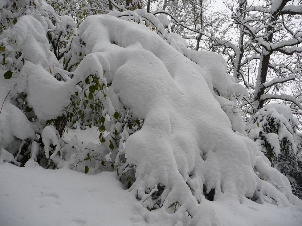 on-retrouve-les-paysages-d-hiver-raquettes-cadeilhan-trachere