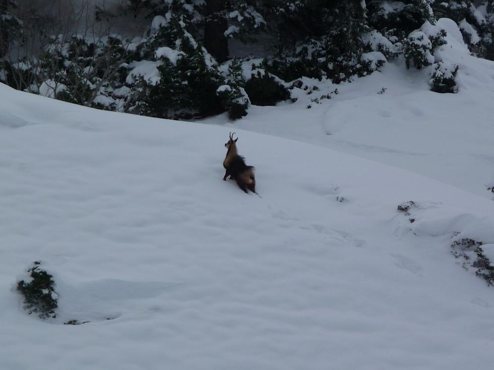 pelage-d-hiver-raquettes-moudang