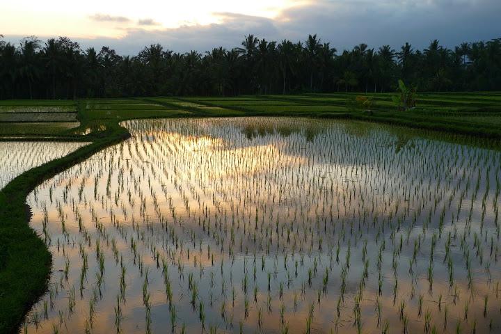 riziere-bali-voyage-indonesie