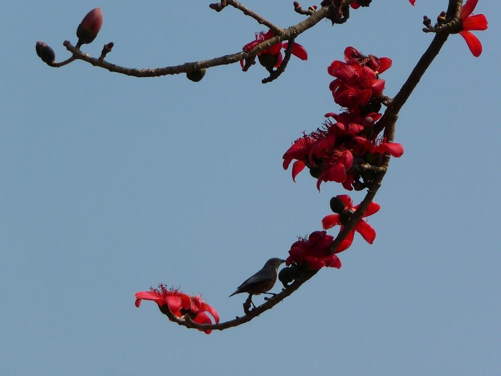 oiseau-sur-branche-bangladesh-voyage-d-exception