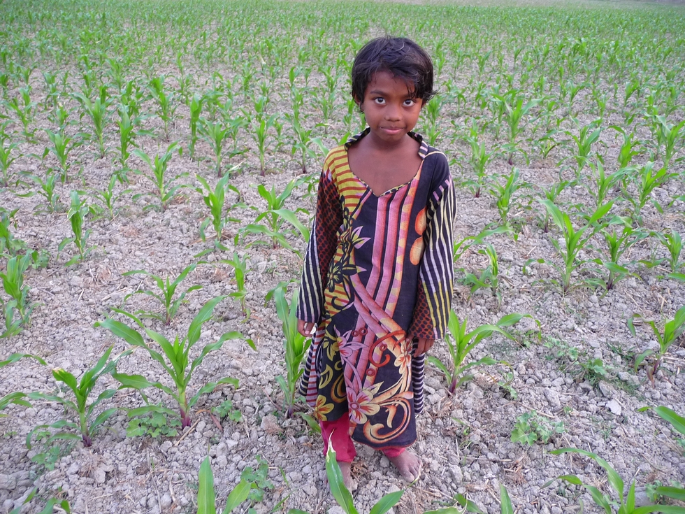 au-milieu-champs-mais-bangladesh-chez-mes-amis-voyage-d-exception