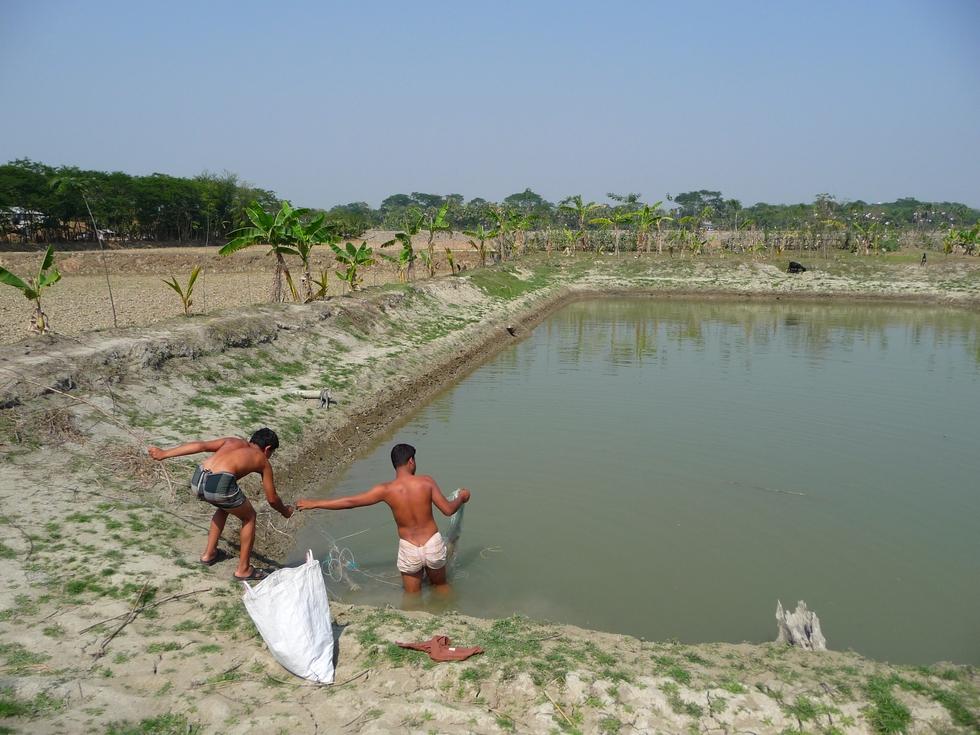 rubel-assiste-de-yamin-peche-dans-autre-pushkuni-familial-bangladesh-chez-mes-amis-voyage-d-exception