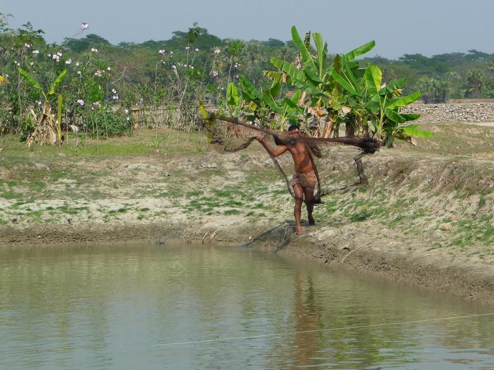 lancer-de-epervier-bangladesh-chez-mes-amis-voyage-d-exception