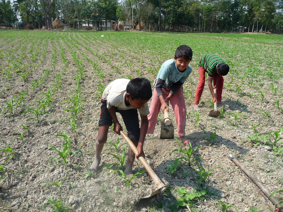 des-enfants-concourent-a-la-tache-bangladesh-chez-mes-amis-voyage-d-exception