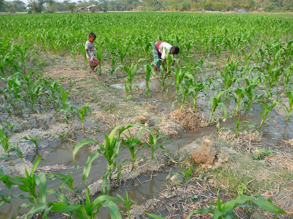 eau-benefique-inonde-les-cultures-bangladesh-chez-mes-amis-voyage-d-exception