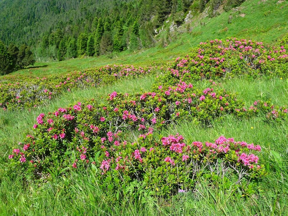 rhodos-bien-en-fleurs-cap-du-mont-boucle-au-depart-ens