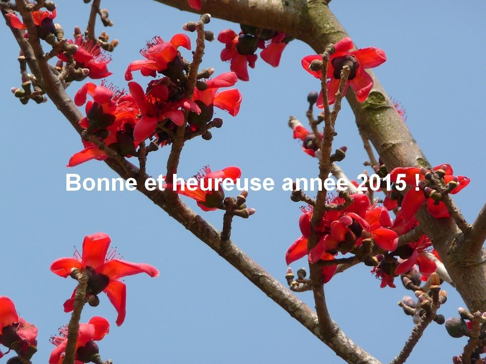 au-bangladesh-arbre-fleuri-meilleurs-voeux-pour-2015