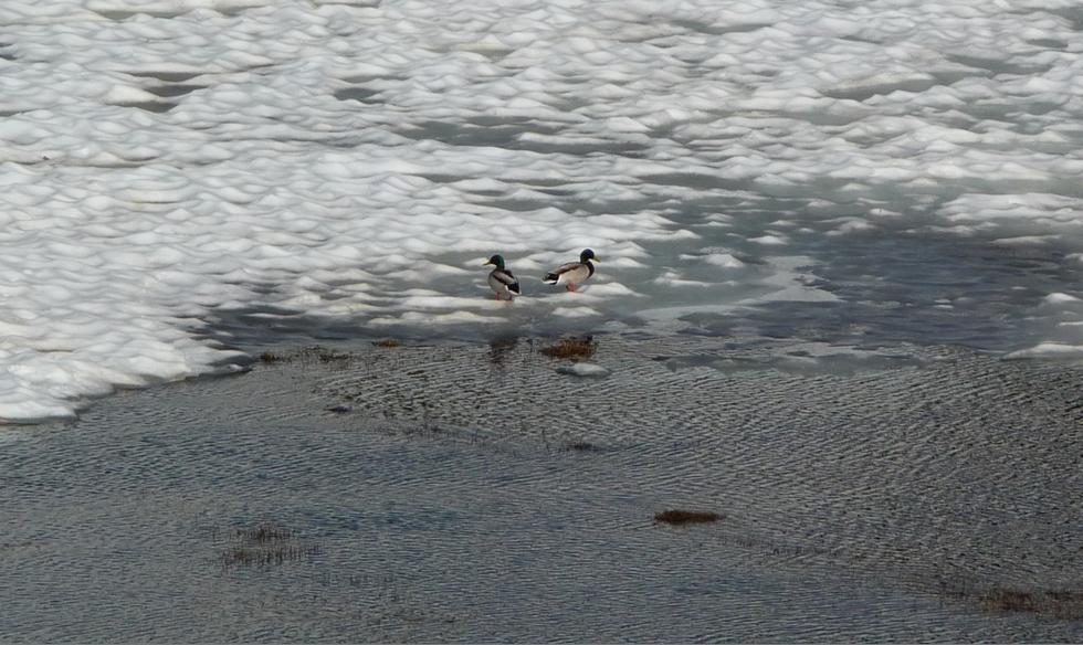 image-grossie-au-lac-port-bielh-canards-sauvages-raquettes-et-canicule