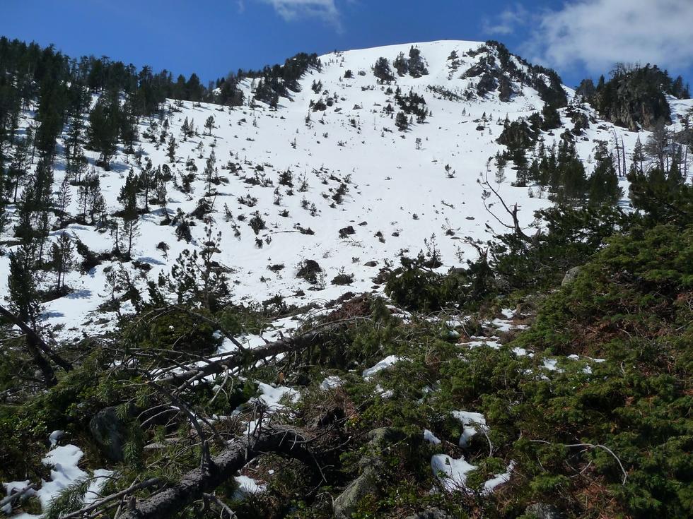 versant-nord-est-monpelat-grosse-avalanche-cet-hiver-au-monpelat-1