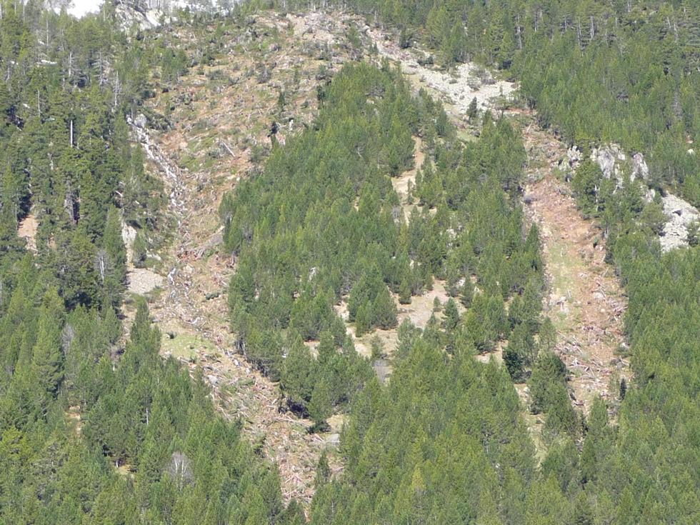 deux-saignees-dans-foret-grosse-avalanche-cet-hiver-au-monpelat-1
