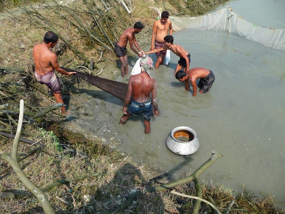 auparavant-tous-branchages-ont-ete-sortis-de-eau-bangladesh-second-travel-12