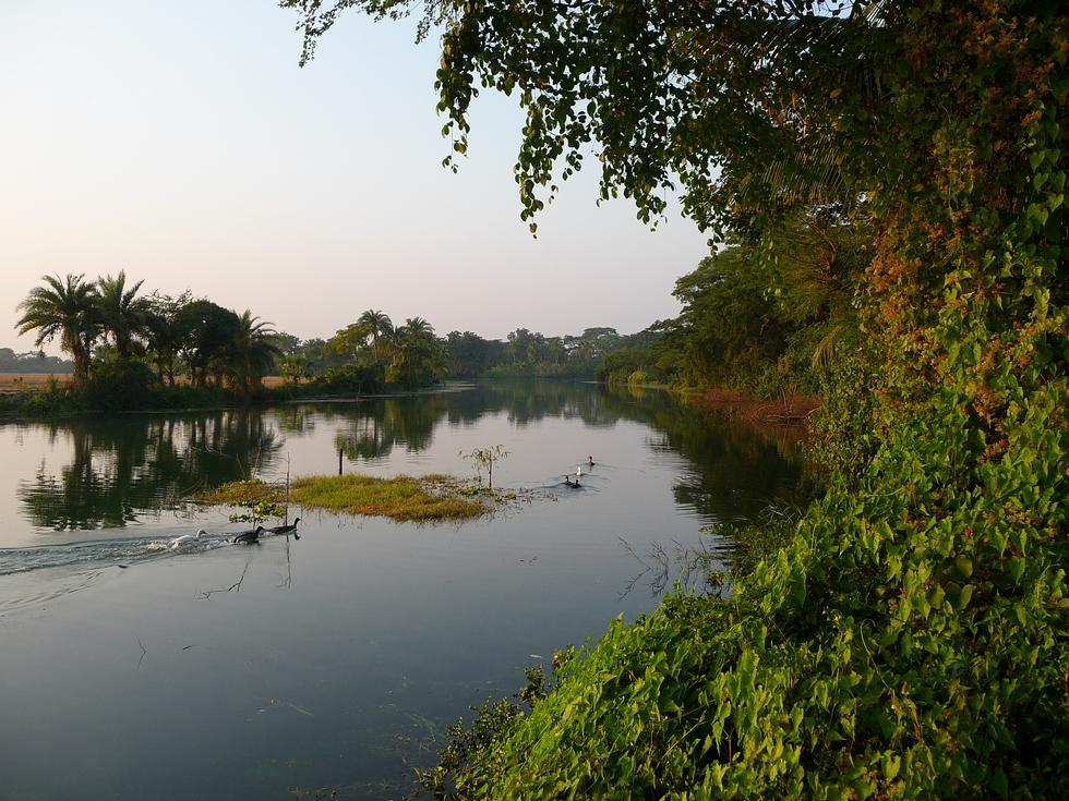 la-ou-verdure-sur-eau-est-endroit-qui-sera-choisi-pour-peche-bangladesh-second-travel-13