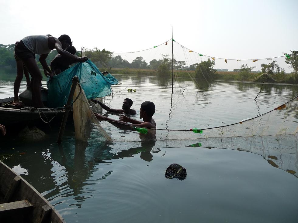 des-tas-de-bois-des-fagots-ont-ete-immerges-ici-afin-de-servir-habitat-aux-crevettes-bangladesh-second-travel-13