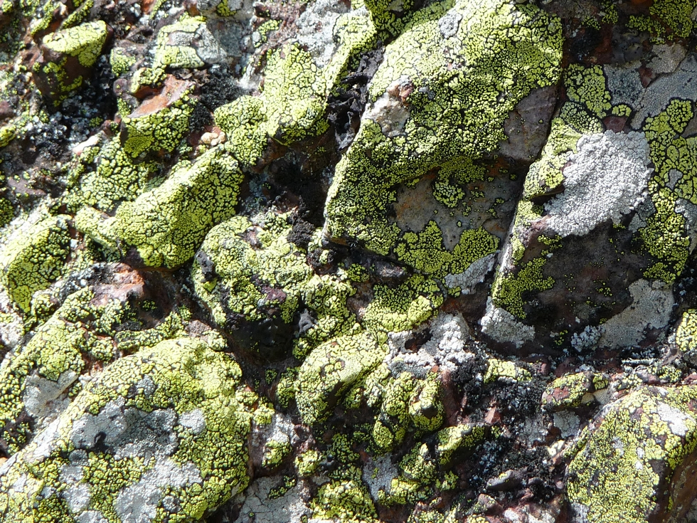 fameux-lichens-monne-rouye-balade-monne-rouye