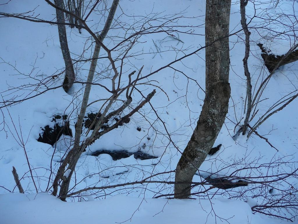 il-reapparait-la-une-petite-sortie-a-heure-du-gouter-granges-foraines-en-hiver