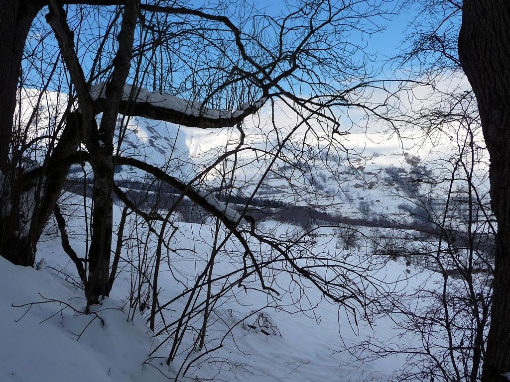 trouee-entre-arbres-une-petite-sortie-a-heure-du-gouter-granges-foraines-en-hiver