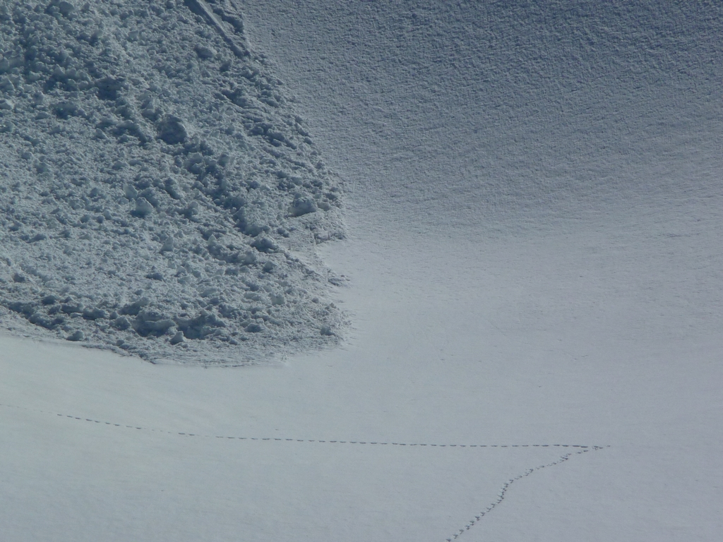 traces-renard-et-front-avalanche-escapade-en-val-aube
