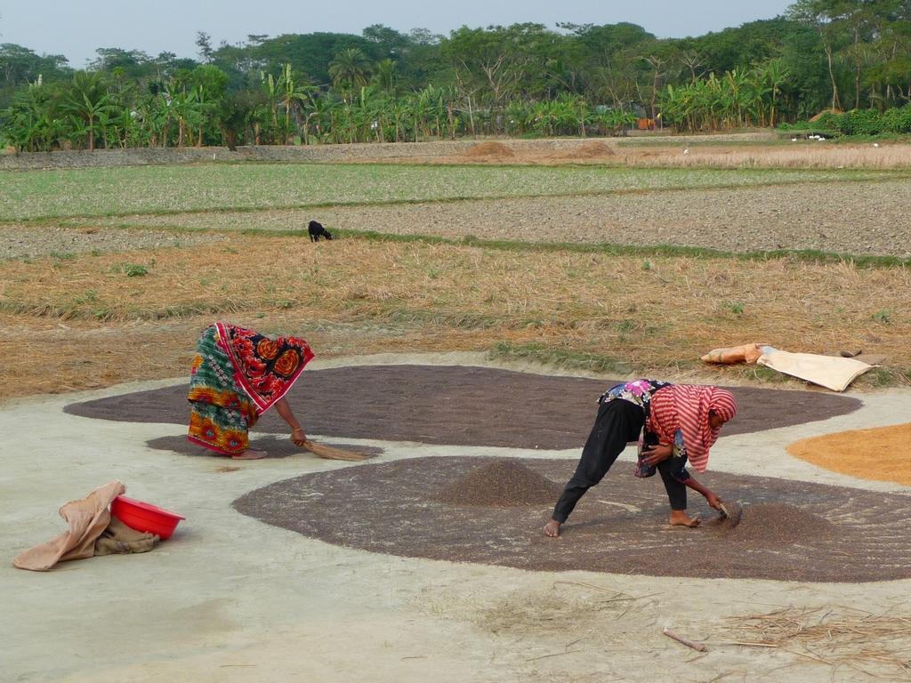il-faut-beaucoup-se-baisser-riz-au-bangladesh-aspects-vie-quotidienne-2