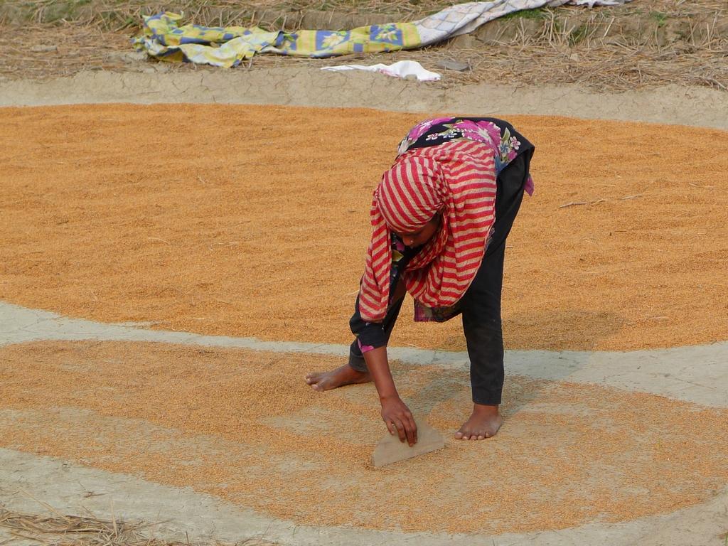 kanok-utilise-raclette-riz-au-bangladesh-aspects-vie-quotidienne-2
