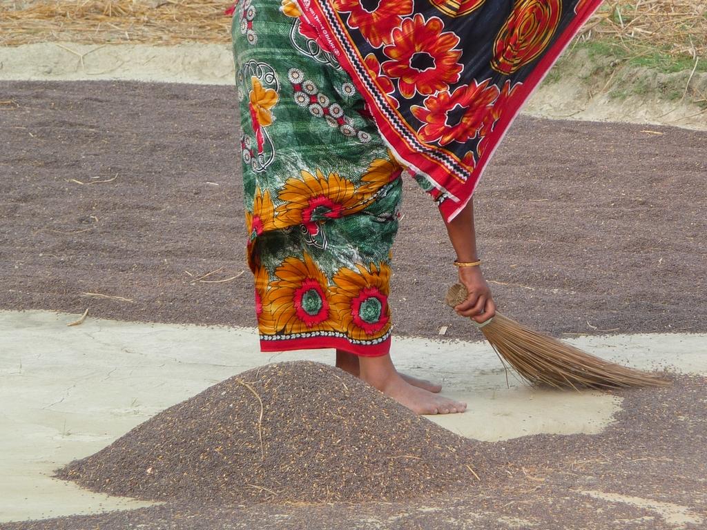 piara-se-sert-petit-balai-riz-au-bangladesh-aspects-vie-quotidienne-2