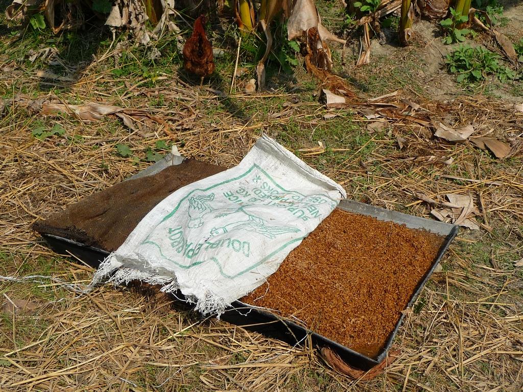 riz-ete-precuit-dans-grand-plat-riz-au-bangladesh-aspects-vie-quotidienne-3