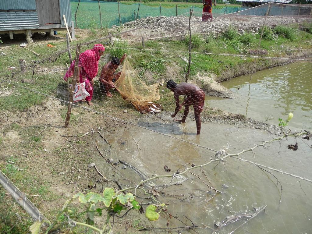 poissons-seront-tries-et-certains-remis-a-eau-un-nouveau-voyage-chez-mes-amis-bangladesh