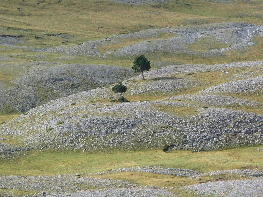 solitaires-sur-les-hauteurs-desertiques-du-cotiella-2