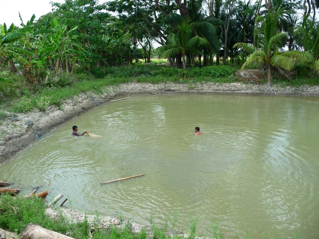 rubel-et-jamal-avancent-nageant-dans-pushkuni-trainant-filet-derriere-eux-peche-traditionnelle-au-filet