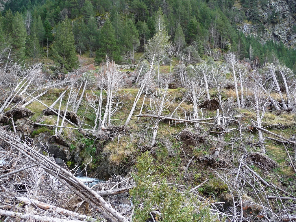 cimetiere-pins-resultat-avalanche-en-vallee-trigoniero