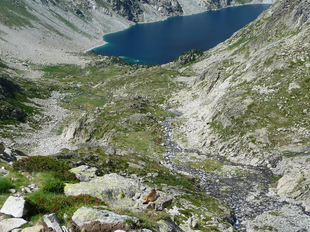 marmotte-prend-tranquillement-soleil-montagne-cap-long-pic-campbieil-ascension-beau-3000